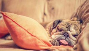 #BeWellUGA at Home: Sleep