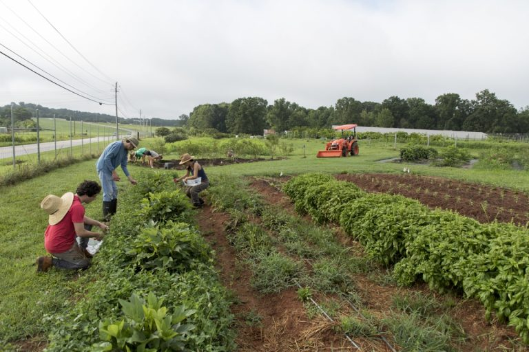 Students working in the UGA Garden